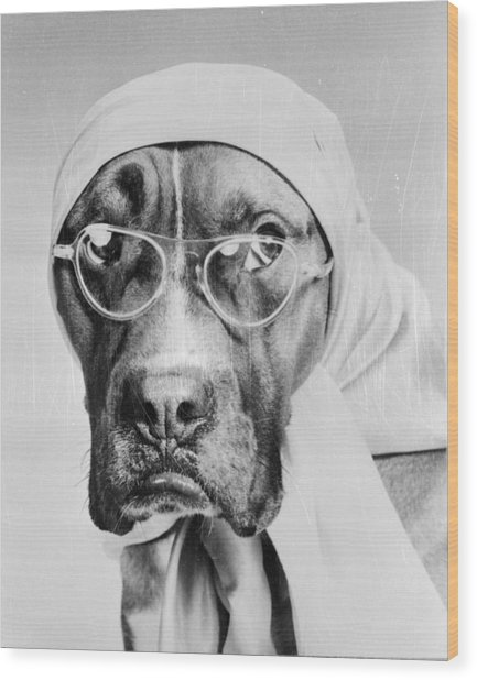 Bohemian Boxer Wood Print by Keystone Features