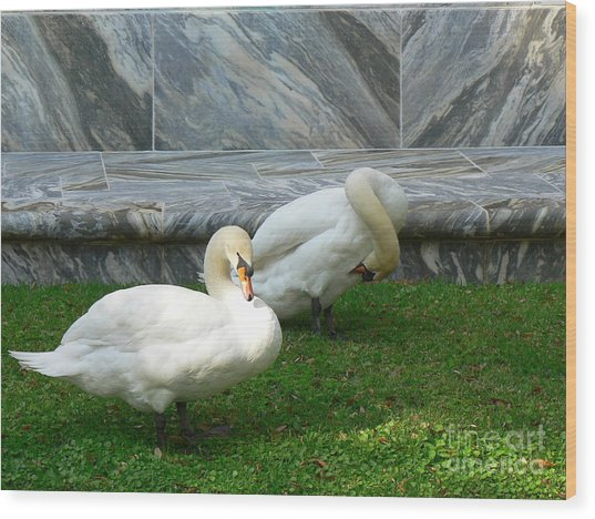 Bok Tower Swans Wood Print