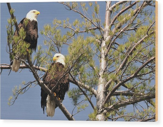Bor River Eagles Wood Print