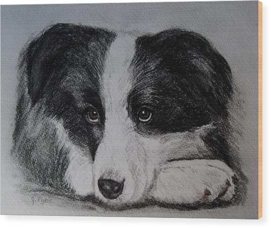 Borden Collie Pup Wood Print by Joan Pye