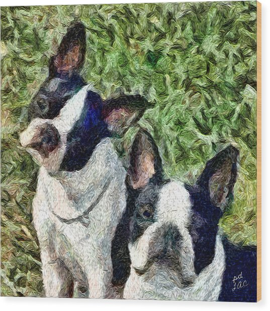 Boston Terrier Duo - Skipper And Dee Dee Wood Print by Patty Dunlap and Laurence Canter