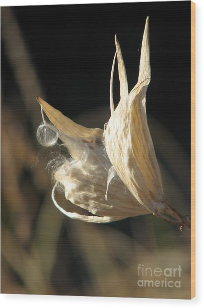 Botanic Wild Wood Print