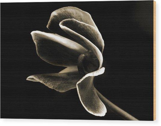 Botanical Abstract. Wood Print by Terence Davis