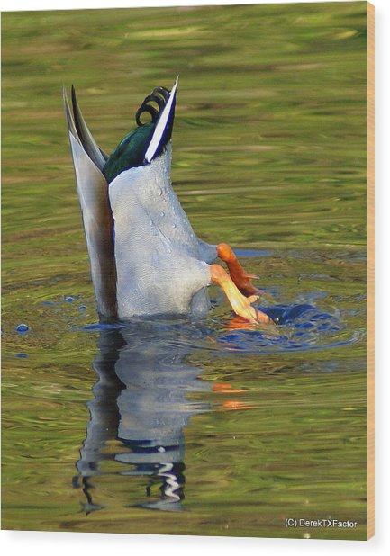 Bottoms Up Mallard Wood Print by DerekTXFactor Creative