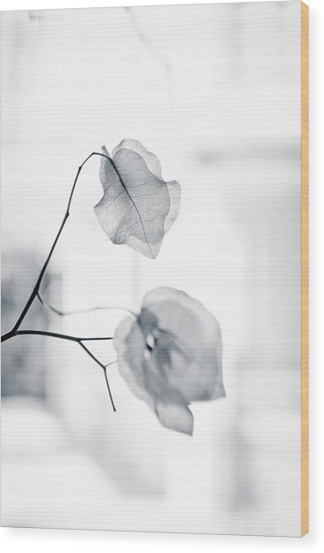 Bougainvillea - High-key Lighting Wood Print