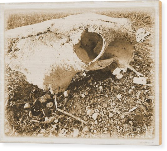 Bovine Skull Wood Print