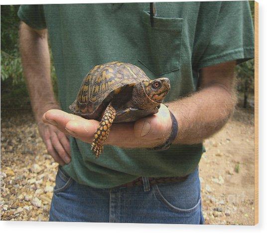 Box Turtle Wood Print
