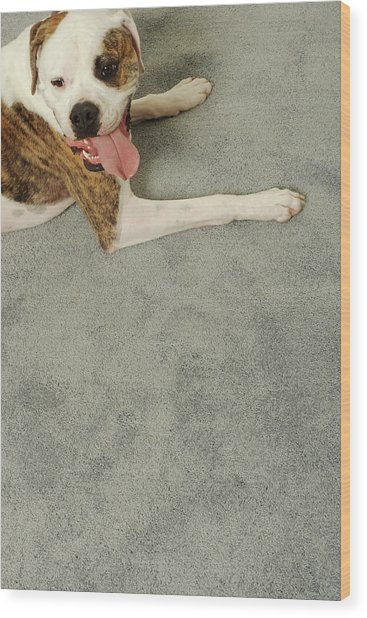 Boxer Dog Lying On Carpet, Overhead View Wood Print by Dtp