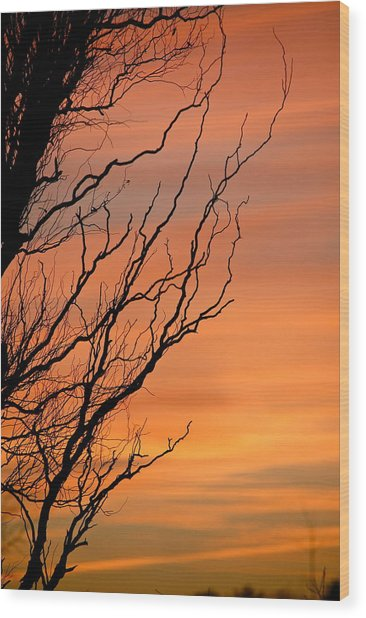 Branches Meandering Through The Sunset Wood Print