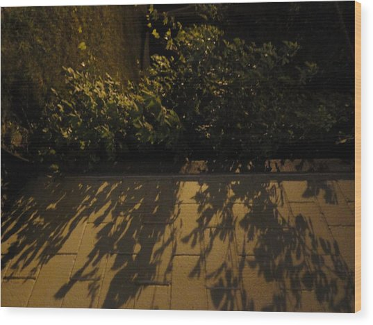 Branches Over The Wall Wood Print by Guy Ricketts