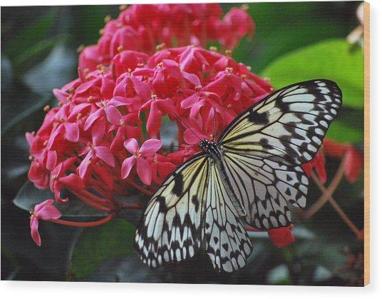 Bright And Beautiful Wood Print