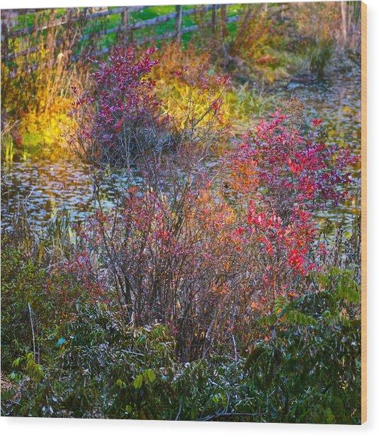 Bright Autumn Light Wood Print