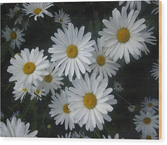 Bright Eyed Daisys Wood Print