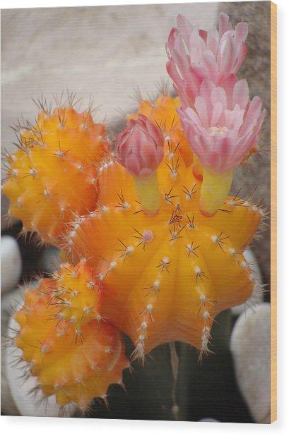 Bright Orange Cactus Wood Print by Emma Manners