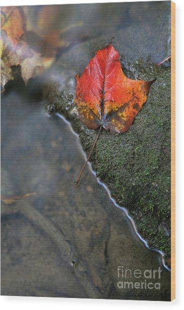 Bright Red Leaf Near A Stream Wood Print by Chris Hill
