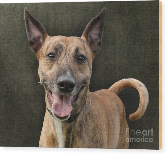 Brindle Dog With Great Ears Wood Print