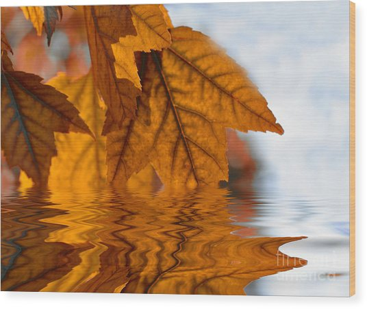Bronze Reflections In Autumn Wood Print