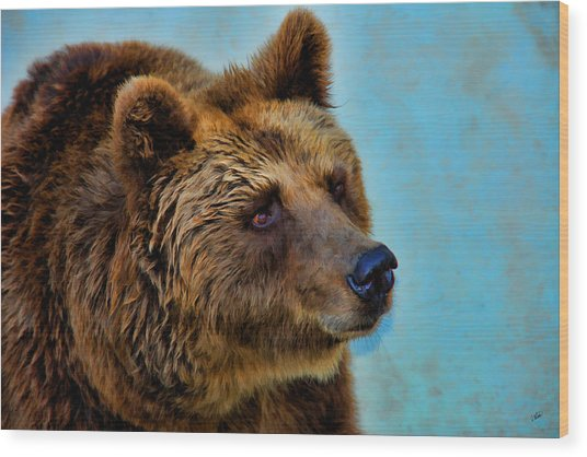 Brown Bear 203 Wood Print