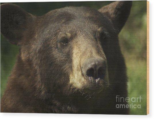 Brown Bear Wood Print by Jenny May