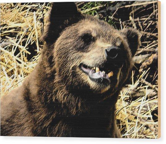 Brown Bear Smiling Wood Print by Derek Swift