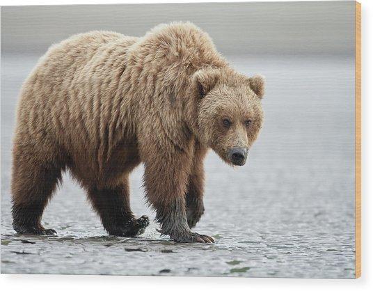 Brown Bear Stare Wood Print