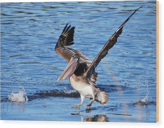Brown Pelican Landing Wood Print