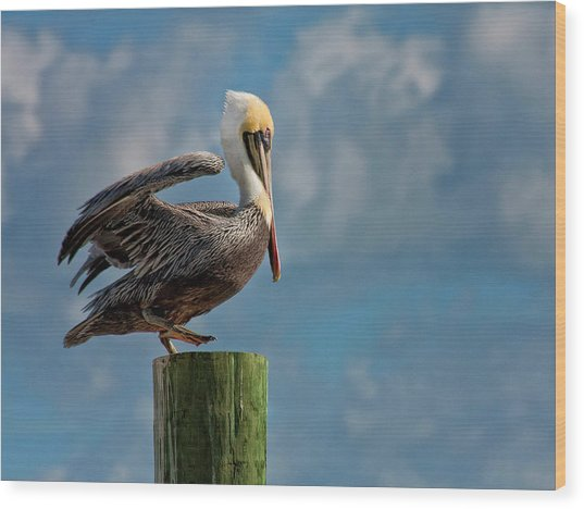Brown Pelican Ready To Fly Wood Print