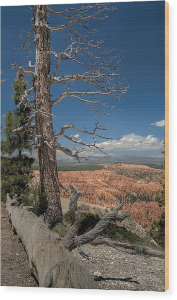 Bryce Canyon - Dead Tree Wood Print