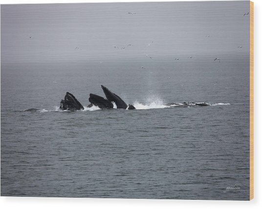 Bubble Netting Whales In Alaska Wood Print