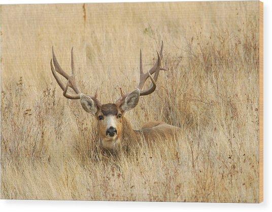 Buck In Grass Wood Print