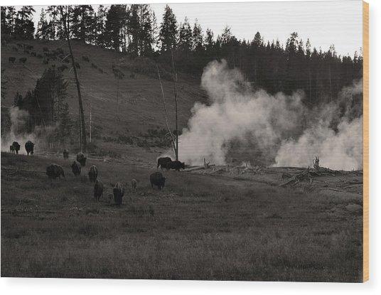 Buffalo Apocalypse  Wood Print