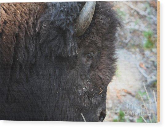 Buffalo Close Up Wood Print by Dave Knoll