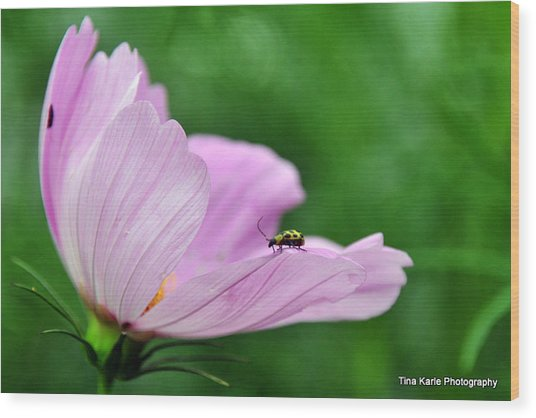 Bug On Flower Tip Wood Print by Tina Karle