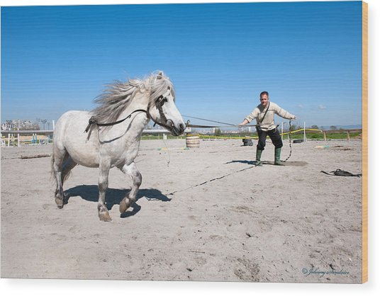 Bulgaria Horse Wood Print