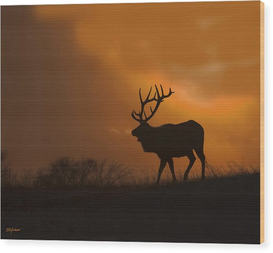 Bull Elk Frozen Sunset Wood Print