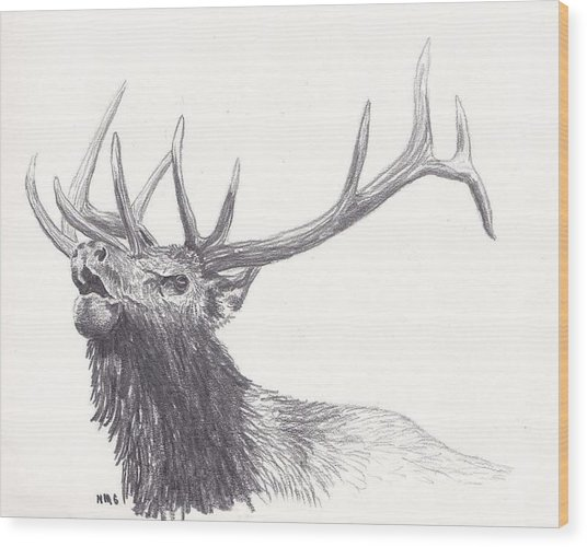 Bull Elk Wood Print by Nicole Grattan