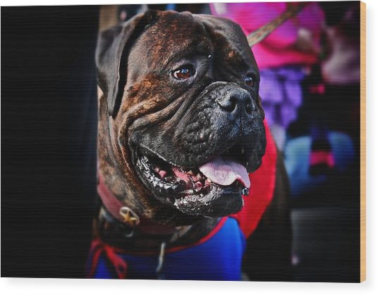 Bulldog At Barkus Parade 2 Wood Print