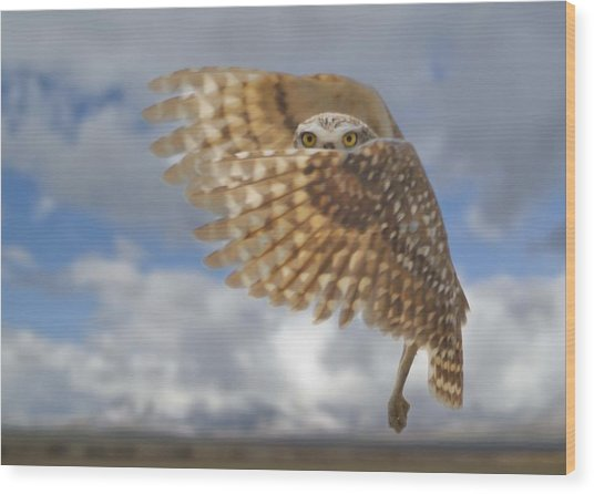 Burrowing Owl Liftoff Wood Print