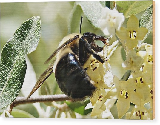 Busy As A Bee Wood Print