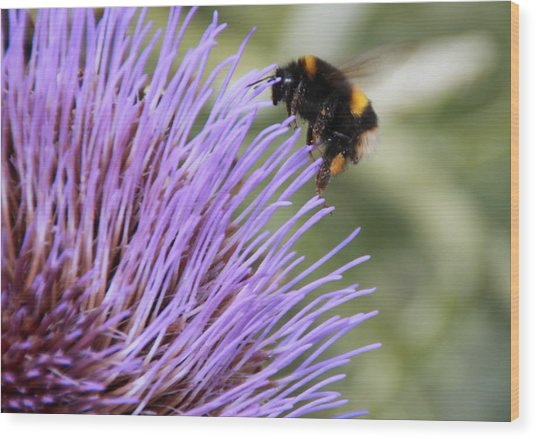 Busy Bee Wood Print by Karen Grist