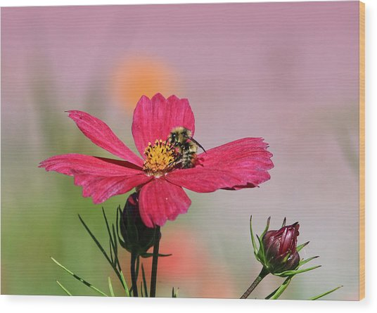 Busy Bee Wood Print by Ronald Lafleur