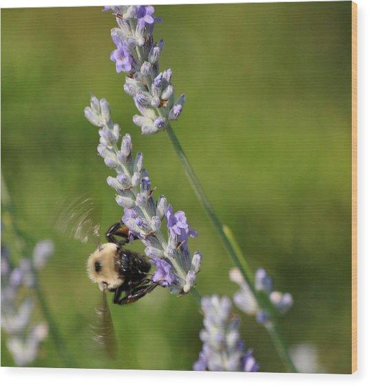 Busy Bee Wood Print by Terri Albertson