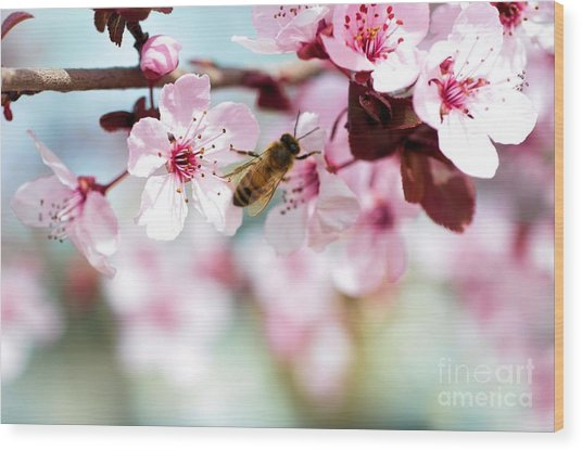 Busy Buzzing Around These Beautiful Blooms... Wood Print