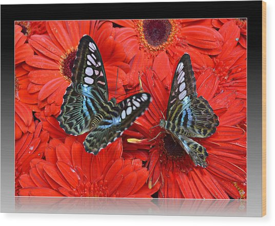Butterflies On Red Flowers Wood Print