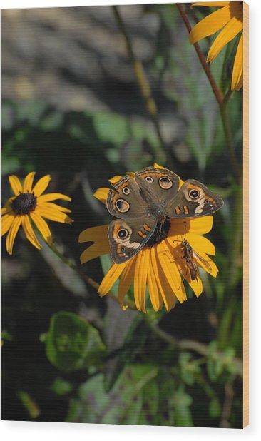 Butterfly 90 Wood Print by Joyce StJames