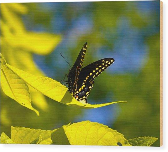 Butterfly Beauty Wood Print by Erica McLellan