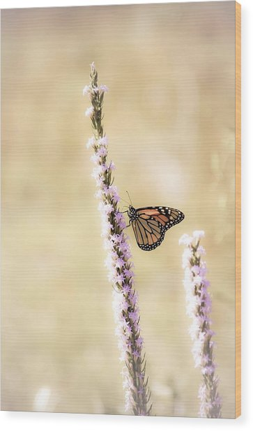 Butterfly Wood Print by Bill Martin