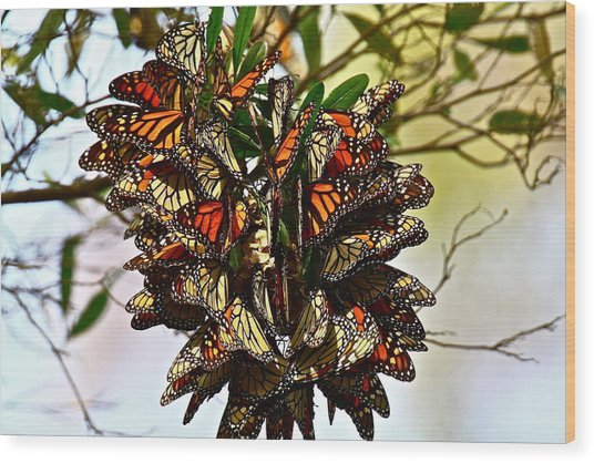 Butterfly Bouquet Wood Print