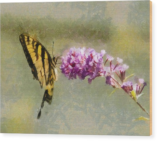 Butterfly Feast Wood Print