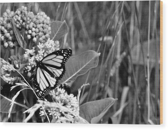 Butterfly In Black Wood Print by Helen Haw